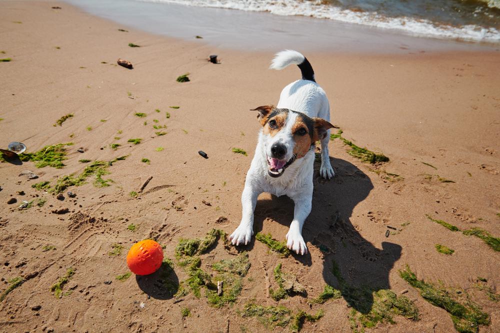playas-perros-españa