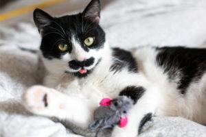 juguete-gato-aburrido